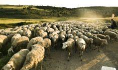 Alimentando a las ovejas o entreteniendo a las cabras