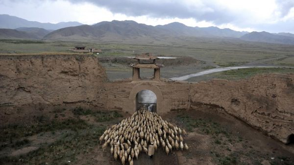 A herder drives his sheep through a gate of the Yongtai ancient town, in Jingtai county, Gansu province, China, June 20, 2015. REUTERS/China Daily